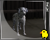 Dalmation Pup !|TYPE:LAY
