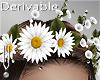 -V- Flowers Crown