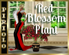 Red Blossome Plant