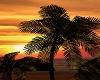 Sunset Lights