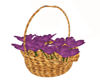 BasketO'PurplePosies