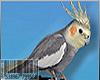 😜HEAD BIRDY M