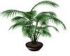 *MM* plant decor