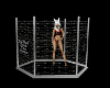 (1M) Uymos Cage