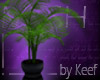 Kentia Palm, Corner