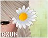 Daisy Hair L | F