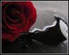 Bloody Rose Frame