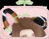 🌱 Aussie Ears