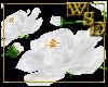 Floor Roses - White