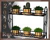 Rus: B&G plants