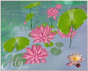 Water Lilies Plant