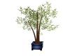Blue Asian Planter