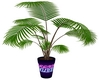 Plante Perso