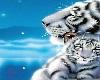 White Tiger Room