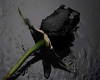 [PG] Black rose picture