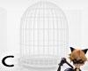 (C) White Cage
