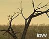 """Iv""""Tree"""