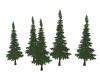 X-MAS  PINE  TREES