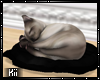 !K! Oculus Kitty