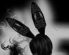 Blck CRCT Bunny Ears