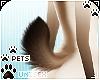 [Pets] Kimi | tail v6