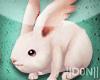Kawaii Bunny !!!
