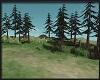 Dreamland-forest