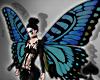 Cat~BlueButterfly WingsF
