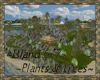 ⚡ Island 6-7 Plants