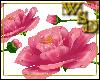 Floor Roses Pink