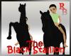 M/F RIDEABLE BLACK HORSE