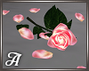 Pink Rose & Petals