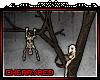 [C]DeadTree(5)