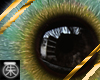 }T{ Kyanna's Eyes