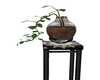 Vasew/plants