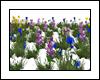 Grama & Flores