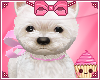 ! White Puppy Pink Bow