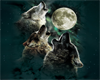 IvI Baby Wolf BLANKET