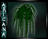 {Ari} Nocturn Plant