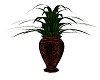Old Style Plant