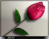 !M! Valentine's Rose