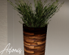Decorative Patio Plant 3