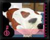 |OBB|AIDEN'S BULL DOG