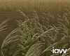 "Iv""Field"