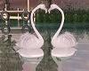 Flamingos Lovers