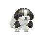 IDOMMY [ Kids Dog ]