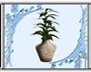 Wonderful White Plant