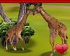 Mm Interactive Safari