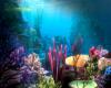 Ocean Sea Dome DJ Light
