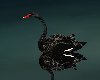 Exile Black Swan